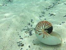 在水下的壳 免版税库存照片