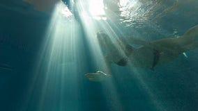 在水下的女孩游泳反对在水池的光 股票视频