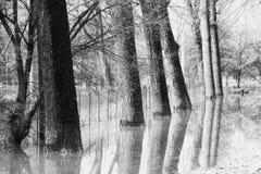 在洪水下的树 免版税库存照片