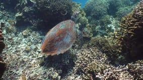 在水下的海龟 股票录像