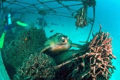 在水下的珊瑚礁的海龟 库存照片
