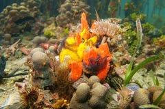 在水下的美洲红树下的五颜六色的海洋生物 库存图片