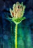 在水下的花与泡影 免版税库存图片