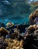 在水下的风景 免版税图库摄影