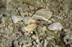 在水下的死的珊瑚 库存图片