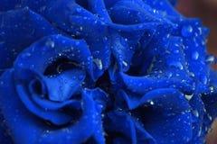 在水下落的蓝色玫瑰 库存图片