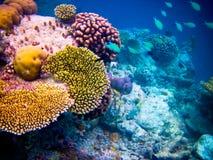 在水世界之下的马尔代夫 库存照片