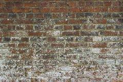 在13世纪托特修道院的古老废墟的一个银行砖墙Titchfield的,费勒姆在汉普郡英国 库存照片