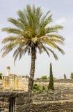 在1世纪犹太犹太教堂的废墟的旁边棕榈树 免版税库存图片