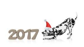 在2017个新年数字附近的圣诞老人狗 免版税库存照片