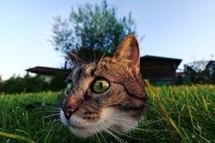 在攻击之前的一只猫 免版税库存照片