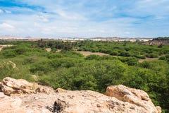 在维亚纳沙漠, Boavista -佛得角附近的绿洲 免版税库存照片