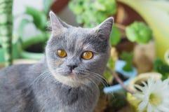 在仙人掌花附近的一只好的灰色猫 免版税图库摄影