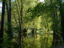 在水位高的西南密苏里Ozark夏天绿色树 库存照片