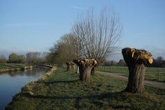 在更低的莱茵河地区的早期的春天 库存图片