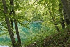 在更低的蓝色湖附近的森林 在卡巴尔达-巴尔卡里亚 库存图片