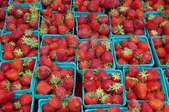 在绿光蓝容器的成熟红色草莓 免版税库存照片