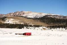 在派克的峰顶附近的马风雨棚 库存图片