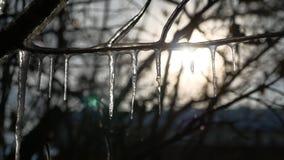在结冰的树枝的冰柱浇灌滴水日落风景阳光冬天 免版税库存图片