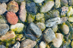 在贝加尔湖下清楚的水的色的石头  免版税图库摄影