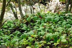 在贝加尔湖的绿色 免版税库存图片