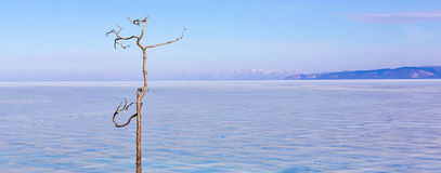 在贝加尔湖背景的偏僻的树在冬天 贝加尔湖海岛湖olkhon俄国 冰 库存图片