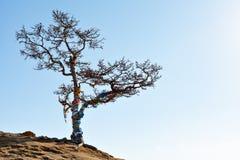 在贝加尔湖背景的偏僻的树在冬天 贝加尔湖海岛湖olkhon俄国 冰 免版税库存照片