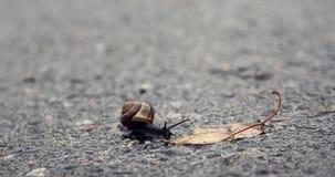 在任务的蜗牛 免版税库存照片
