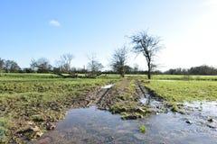 在洪水区域的树 免版税库存图片