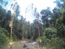 在巴厘岛的自然 免版税库存照片