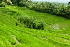 在巴厘岛,印度尼西亚的美丽的米大阳台 图库摄影