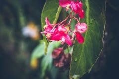 在巴厘岛,印度尼西亚的美好的热带花背景 关闭花 免版税图库摄影