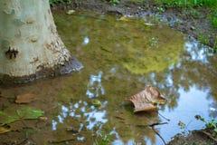 在水反射的树 免版税库存图片