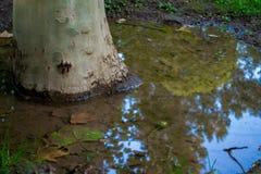 在水反射的树 库存图片