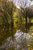 在水反映的多彩多姿的秋天树 免版税库存照片
