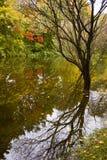 在水反映的多彩多姿的秋天树 库存照片