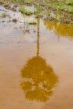 在水反映的桄榔树 图库摄影
