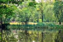 在绿叶中的水 库存图片