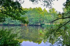 在绿叶中的水 免版税图库摄影