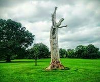 在绿叶之间的死的树 免版税图库摄影