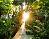 在绿叶的早晨阳光,路在热带密林 库存照片