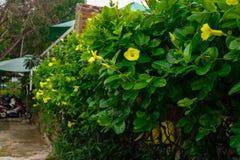 在绿叶的黄色花 免版税库存图片