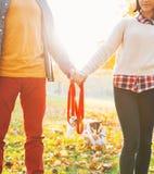 在结合在一起使皮带的夫妇的特写镜头在秋天公园 库存照片