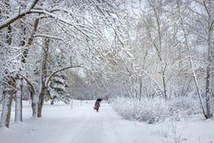 在以后的西伯利亚城市降雪 库存图片