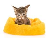 在浴以后的逗人喜爱的浸水的小猫 背景查出的白色 免版税库存图片