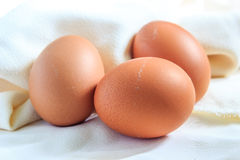 在织品的鸡蛋 库存照片