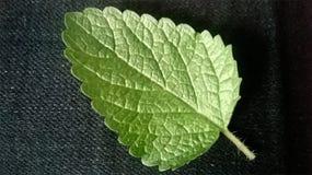 在黑织品背景的叶子薄菏 图库摄影