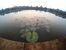 在吴哥窟护城河的美丽的莲花 免版税库存照片