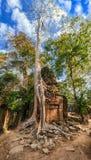 在吴哥窟的Ta Prohm寺庙。暹粒,柬埔寨 库存照片