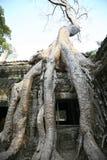 在吴哥窟,柬埔寨大厦的树  免版税库存图片